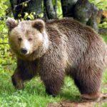 αρκούδα-696x522